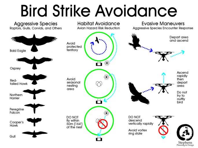 Bird Strike Avoidance